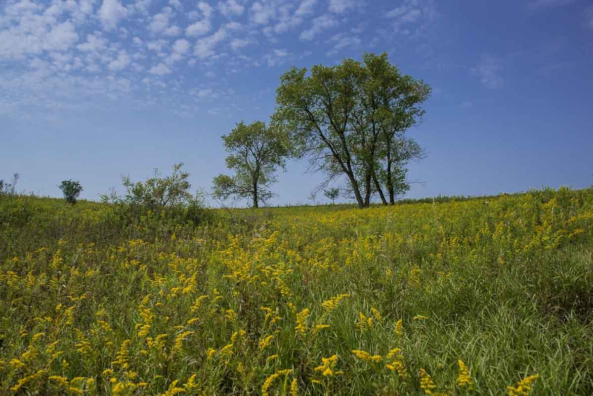 minnesota afton state park prairie