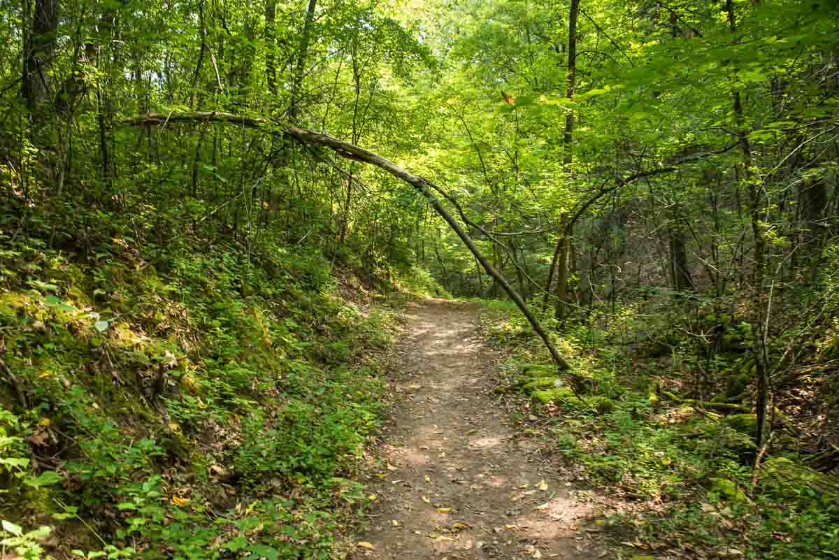 minnesota afton state park wooded path