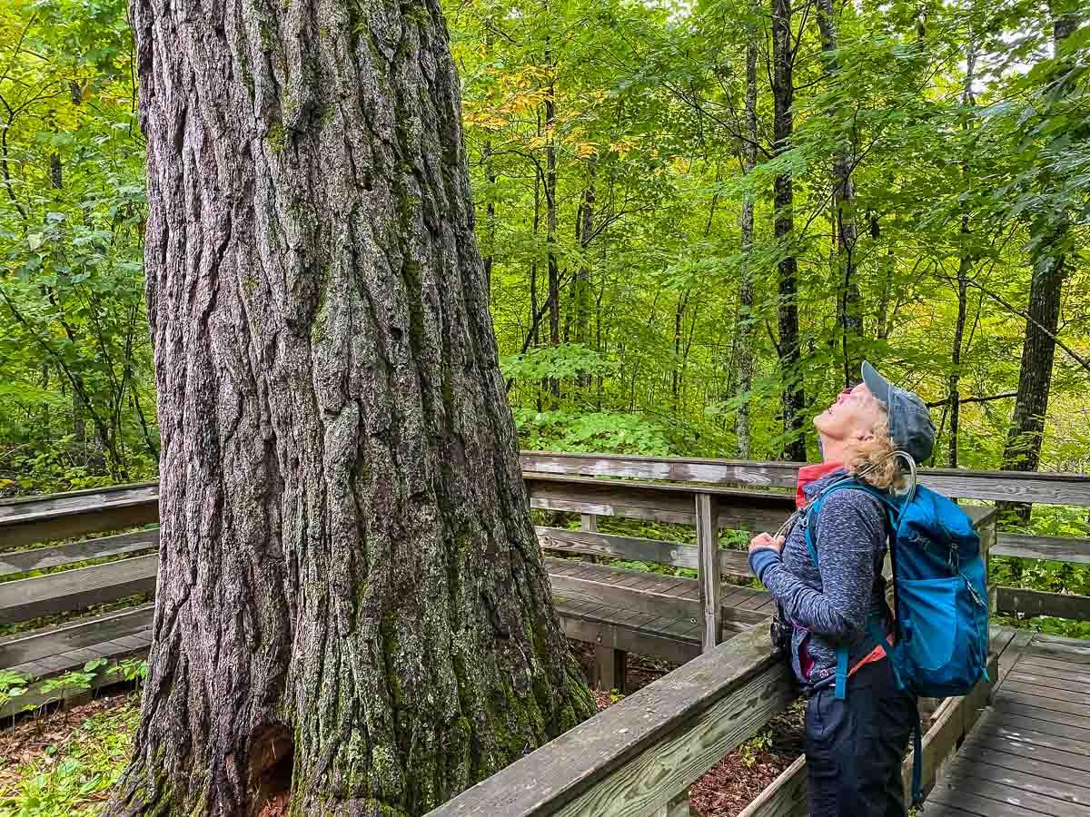 minnesota itasca wilderness trail kris white pine