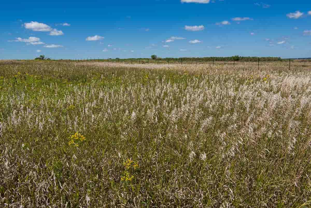minnesota jeffers petroglyphs prairie trail