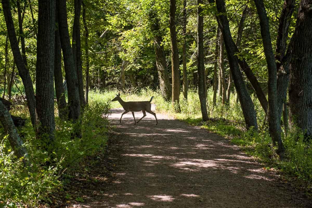 minnesota lake shetek state park deer picnic trail